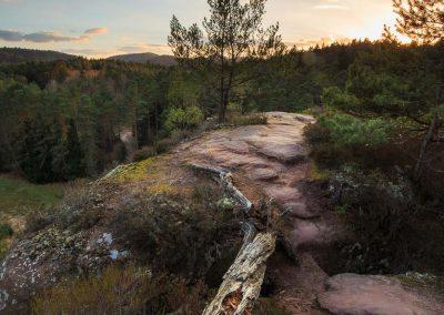 Alter Baum am Elwetrischenfelsen im Dahnerfelsenland