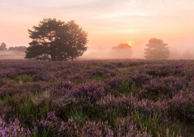 Die Sonne erwacht in der Mehlinger Heide