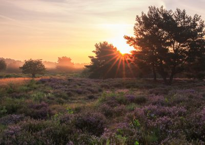 Morgenlicht in der Mehlinger Heide
