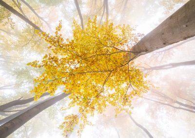 Nebel und tolle Farben im Herbst in der Pfalz