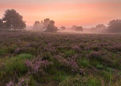 Leuchtende Wolken in der Mehlinger Heide zum Sonnenaufgang
