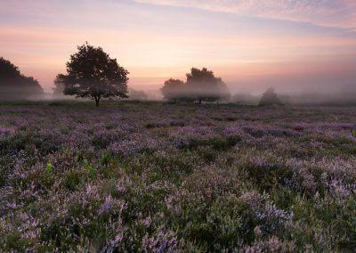 Kurz vor Sonnenaufgang in der Mehlinger Heide