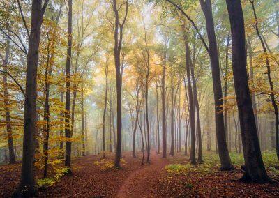 Herbstlicher Wanderweg im Pfälzerwald