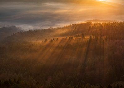 Lichtstrahlen im Nebel verfangen sich im Pfälzerwald