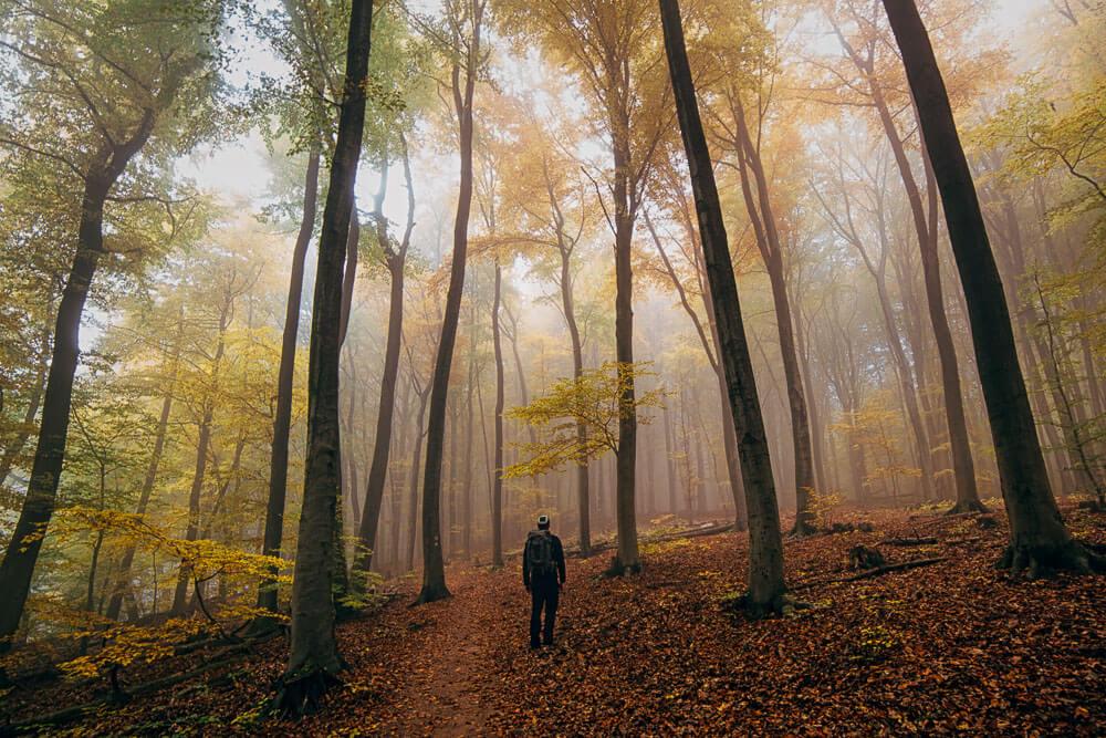 wandern_im_nebelwald