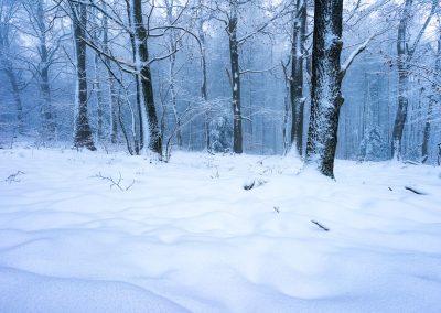 Pfaelzerwald im Schnee