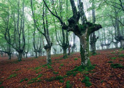 Nordspanien Gorbea Nationalpark