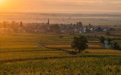 Herbst in der Südpfalz