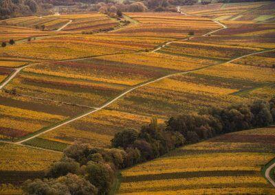 Weinberge rund um Landau im Herbst