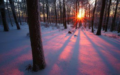 Wintertraum Pfälzerwald – versunken im Schnee